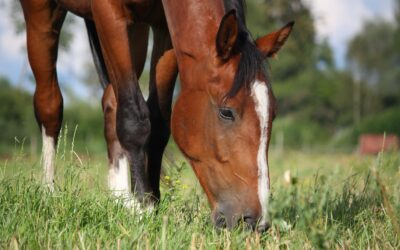 Spring pasture: Tips for a smooth transition