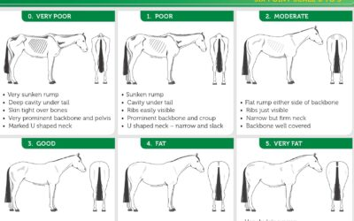 Body Condition Scores for Horses