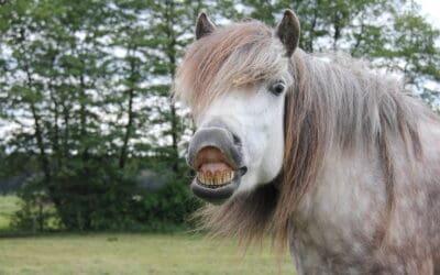 Sensory Abilities of Horses