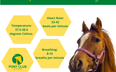 Do you know your horse's vital signs?