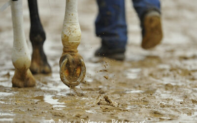 How Winter Weather Affects Hooves – and some tips on how you can help